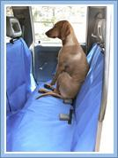 Dog in back of car seat with blue covers on them
