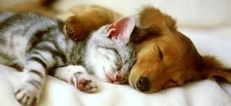 Cute puppy and kitten sleeping on clean white carpet