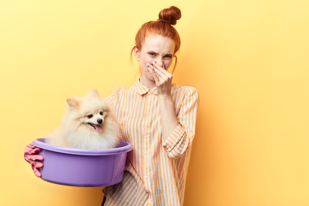 How To Decide For Pet Odor Treatment?